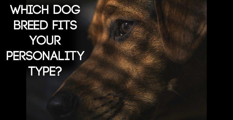 Dog Breed MBTI