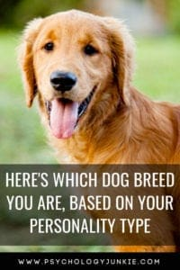 Here's the dog breed you are, based on your #personality type! #MBTI #Myersbriggs #Personalitytype #INFJ #INTJ #INFP #INTP #ENFP #ENTP #ISTJ #ISFJ