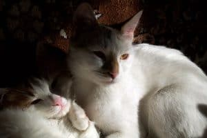 ISFP cat
