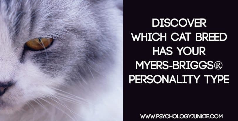 Find out which cat breed has your Myers-Briggs® personality type