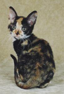 ESFJ Cat