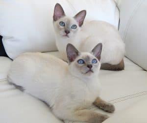 ENFJ cat