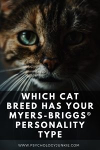 Find out how the 16 personality types match up with 16 different cat breeds! #MBTI #Personality #INFJ