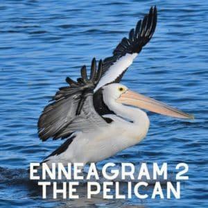 enneagram 2 pelican