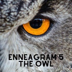 enneagram 5 owl